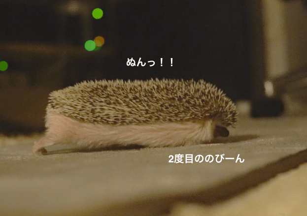 f:id:chikojirou:20170222220234p:plain