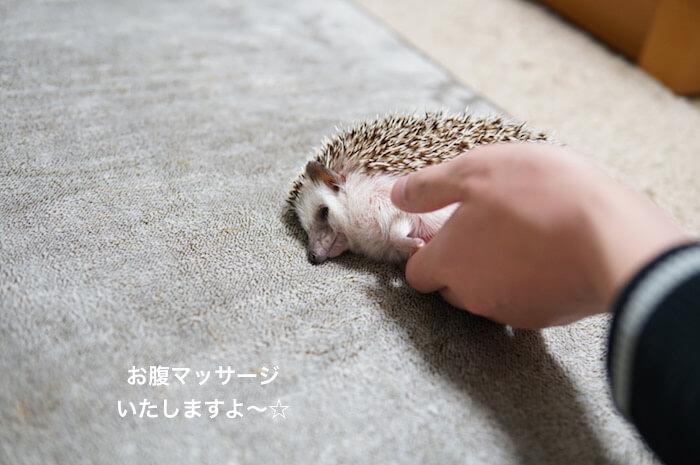 f:id:chikojirou:20170225211842j:plain
