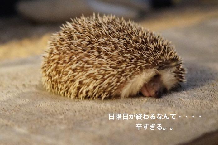 f:id:chikojirou:20170226213523j:plain