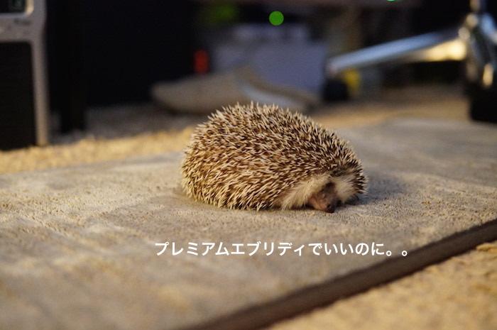 f:id:chikojirou:20170226213544j:plain