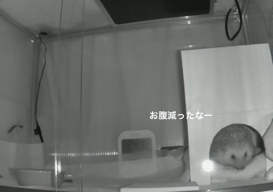 f:id:chikojirou:20170226213659j:plain
