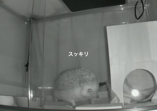 f:id:chikojirou:20170226213823j:plain