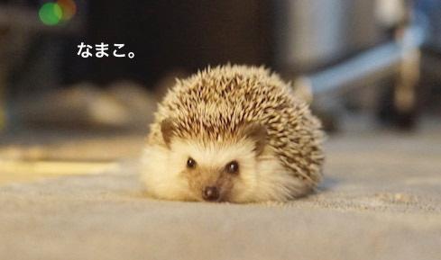 f:id:chikojirou:20170227172115j:plain