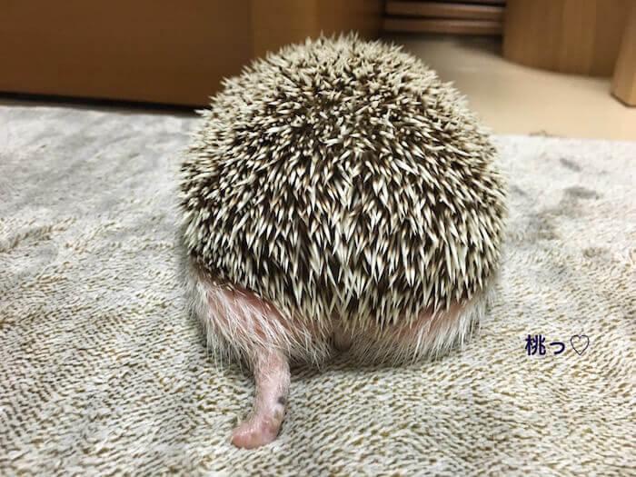 f:id:chikojirou:20170227172221j:plain