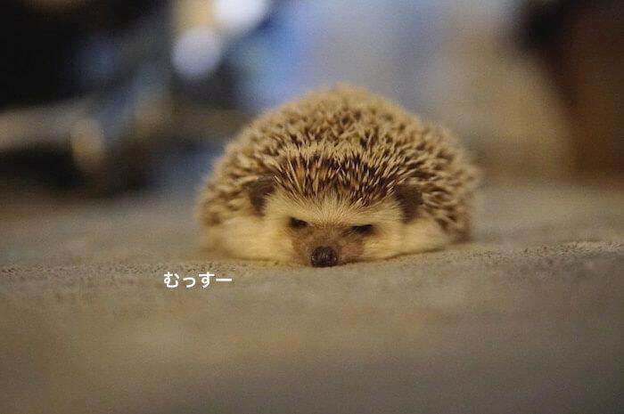 f:id:chikojirou:20170228213811j:plain