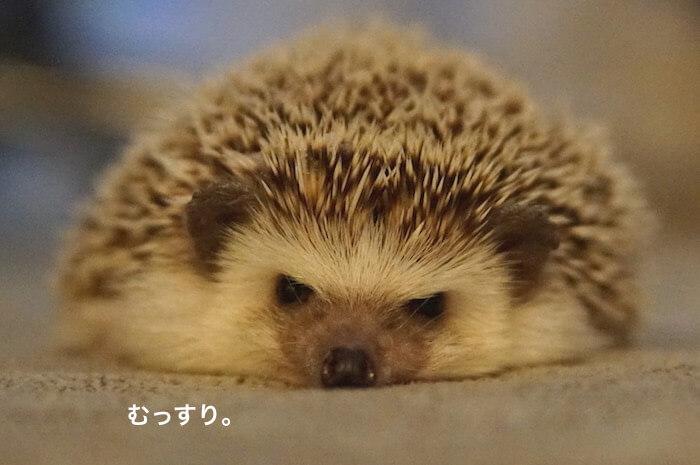 f:id:chikojirou:20170228213831j:plain