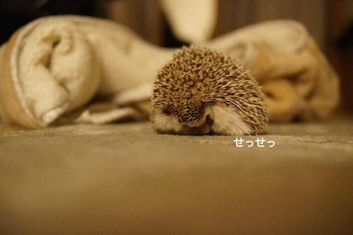 f:id:chikojirou:20170301215350j:plain