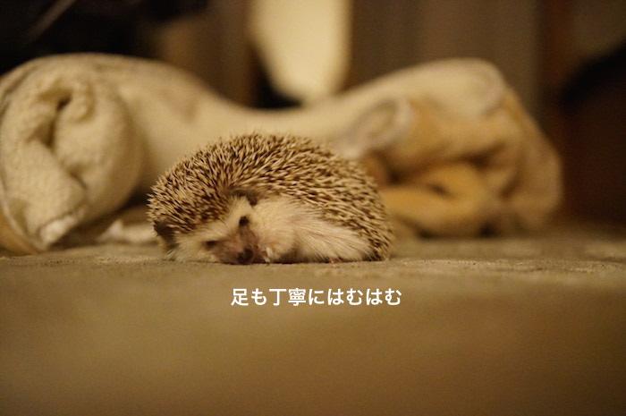 f:id:chikojirou:20170301215359j:plain
