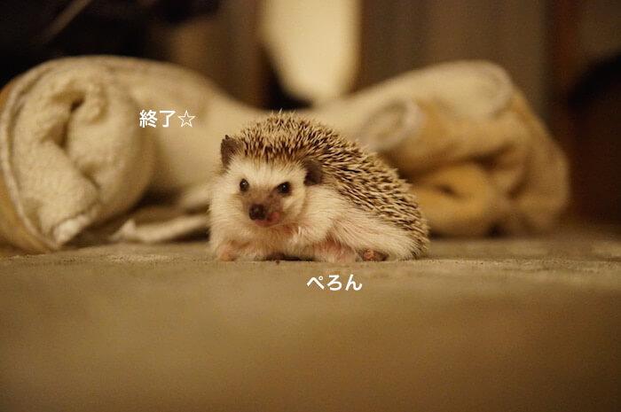 f:id:chikojirou:20170301215420j:plain