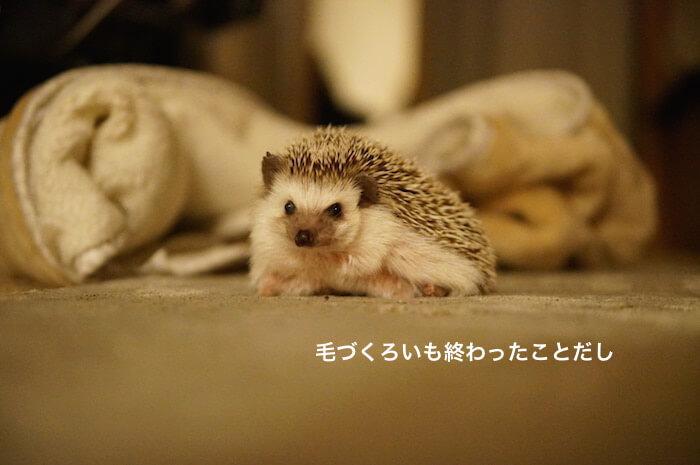 f:id:chikojirou:20170301215448j:plain