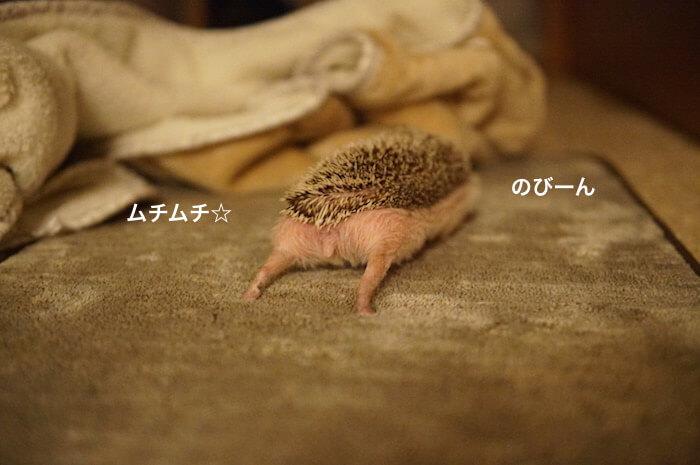f:id:chikojirou:20170301215511j:plain