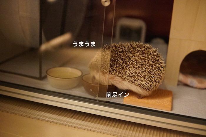 f:id:chikojirou:20170302222514j:plain