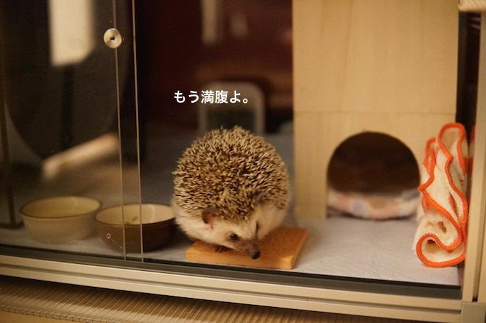 f:id:chikojirou:20170302223354j:plain