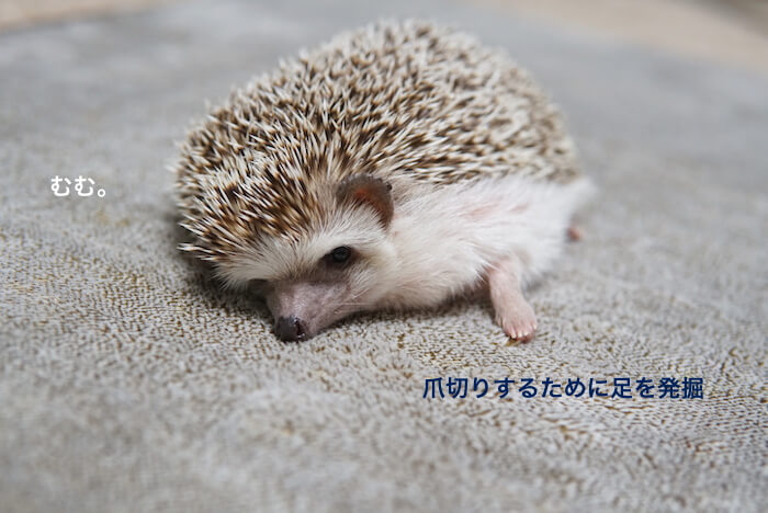f:id:chikojirou:20170304204919j:plain
