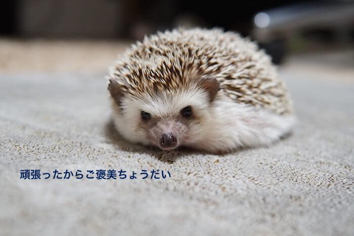 f:id:chikojirou:20170304204938j:plain