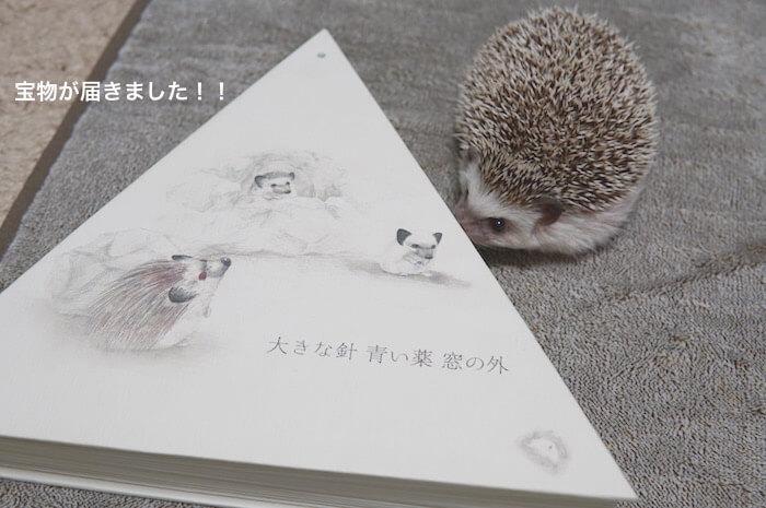 f:id:chikojirou:20170305205019j:plain