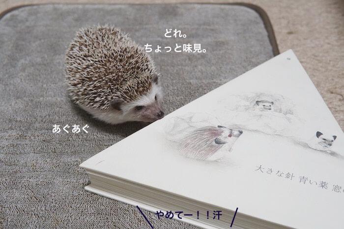 f:id:chikojirou:20170305205029j:plain