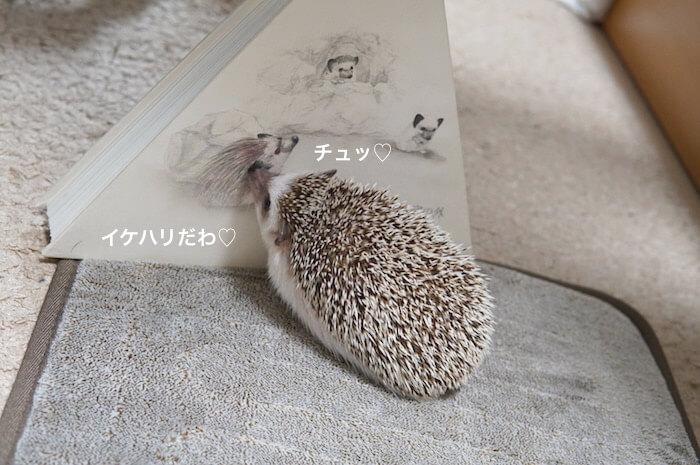 f:id:chikojirou:20170305205216j:plain