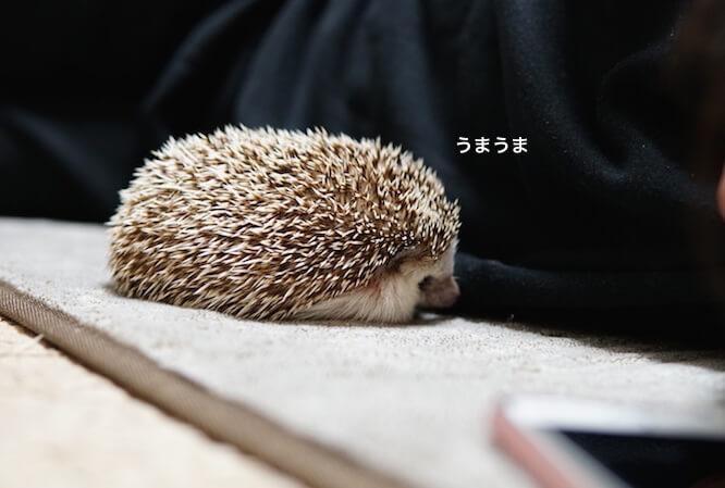 f:id:chikojirou:20170306215258j:plain