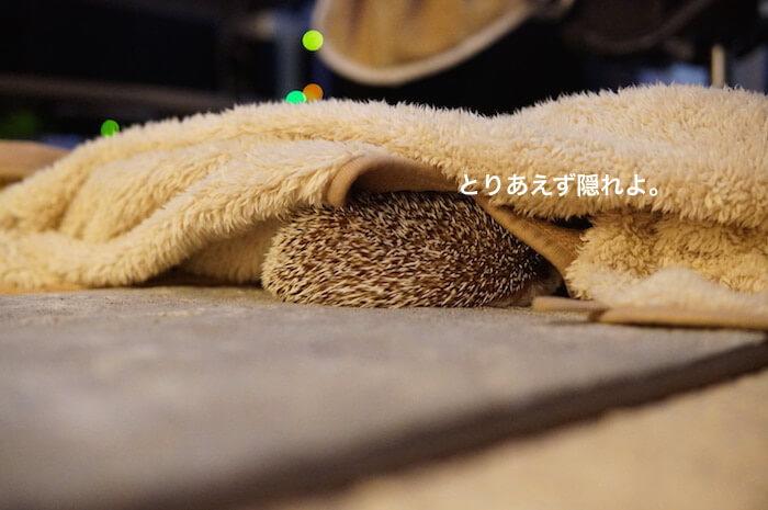 f:id:chikojirou:20170308214721j:plain