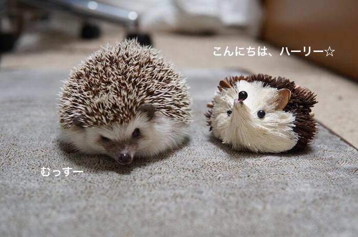 f:id:chikojirou:20170309220722j:plain