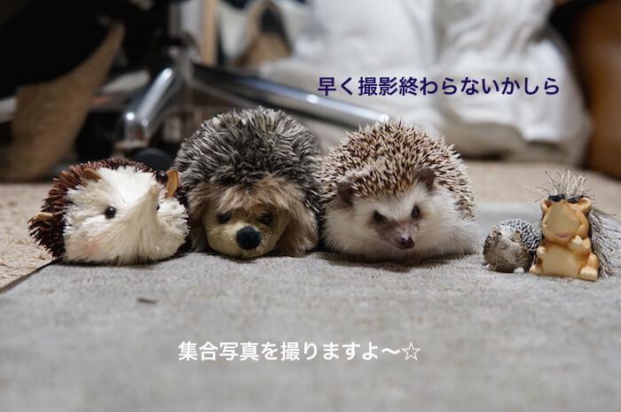 f:id:chikojirou:20170309221057j:plain