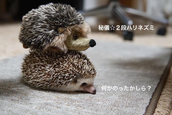 f:id:chikojirou:20170311144259j:plain