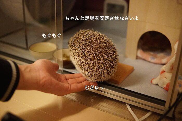 f:id:chikojirou:20170312205035j:plain