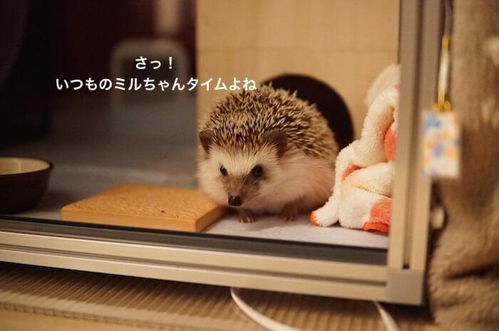 f:id:chikojirou:20170312205106j:plain