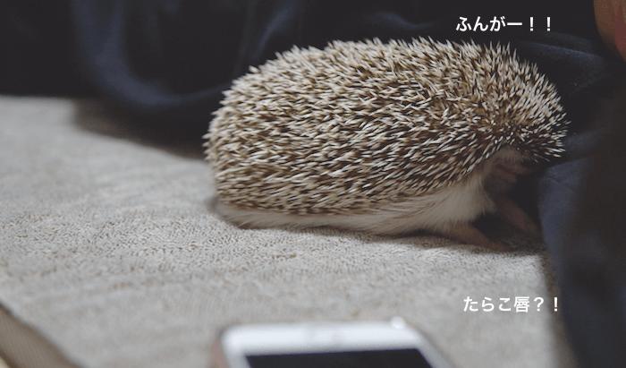 f:id:chikojirou:20170313220656p:plain