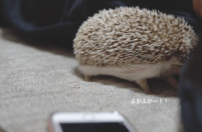 f:id:chikojirou:20170313220712p:plain
