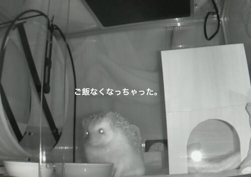 f:id:chikojirou:20170314220726j:plain