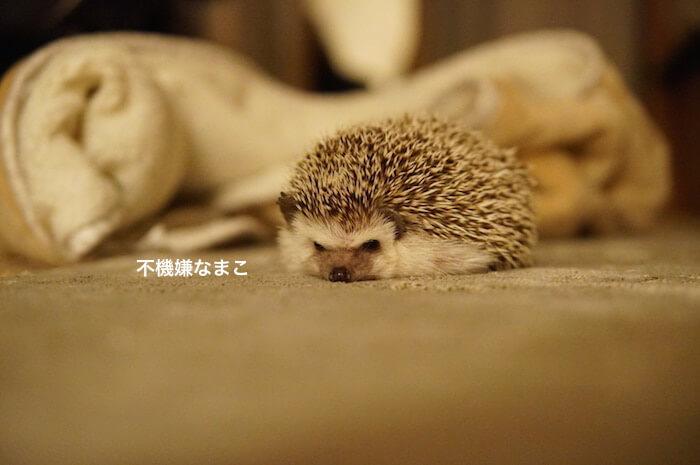 f:id:chikojirou:20170315215611j:plain