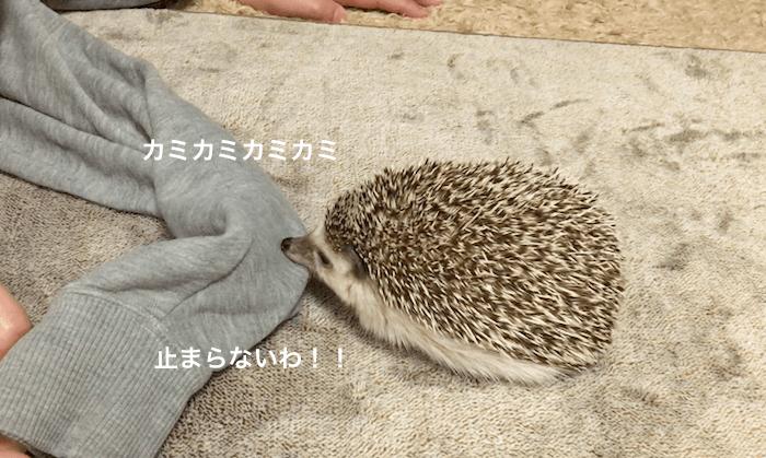 f:id:chikojirou:20170316220907p:plain
