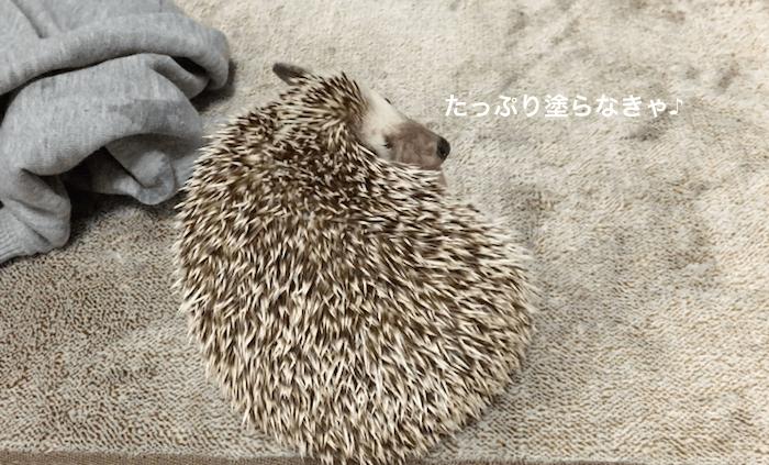 f:id:chikojirou:20170316220954p:plain