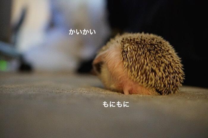f:id:chikojirou:20170318212938j:plain
