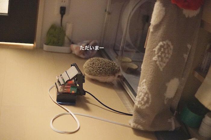 f:id:chikojirou:20170319213806j:plain