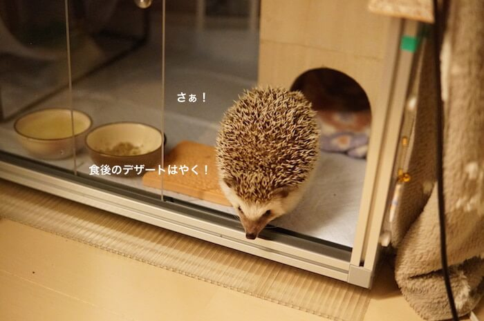 f:id:chikojirou:20170319213823j:plain