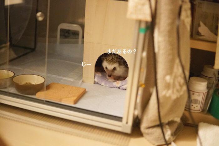 f:id:chikojirou:20170319213858j:plain