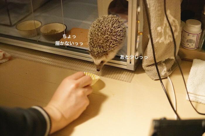 f:id:chikojirou:20170319213911j:plain