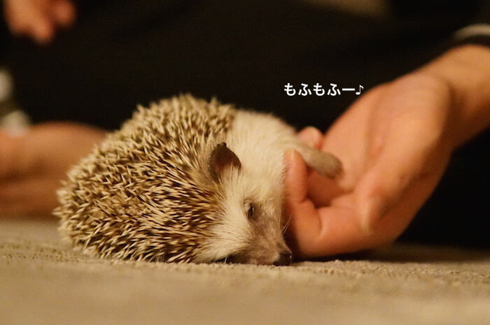 f:id:chikojirou:20170323214224j:plain
