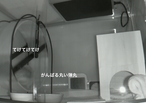 f:id:chikojirou:20170323214306j:plain