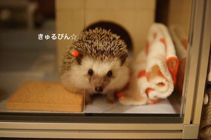 f:id:chikojirou:20170325215104j:plain