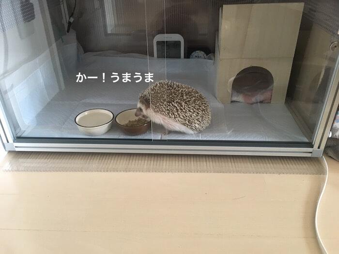 f:id:chikojirou:20170325215235j:plain