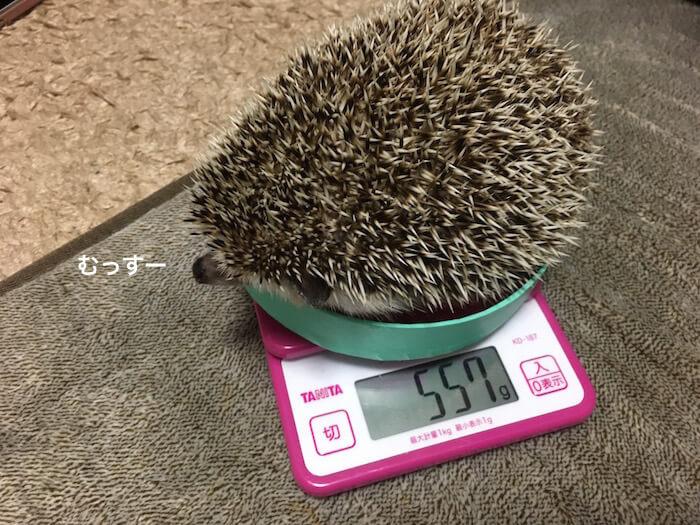 f:id:chikojirou:20170325215333j:plain
