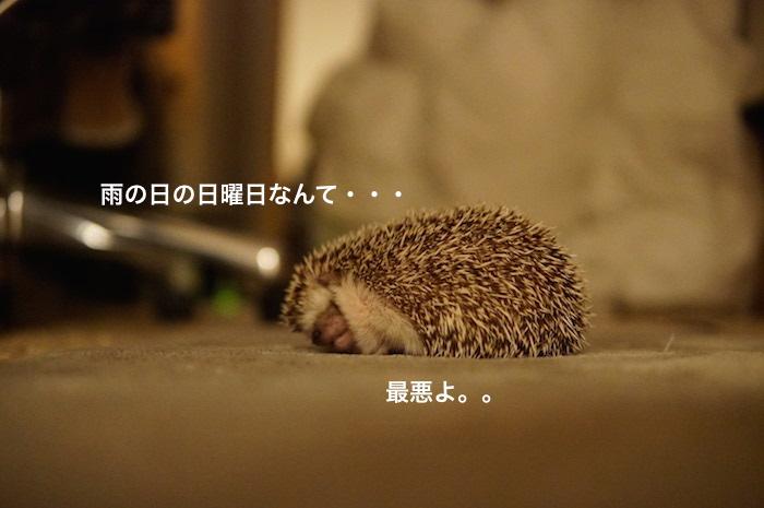 f:id:chikojirou:20170326150926j:plain