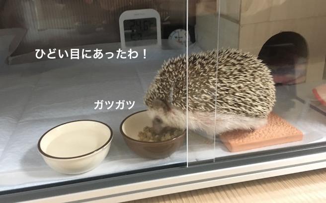 f:id:chikojirou:20170326151035j:plain
