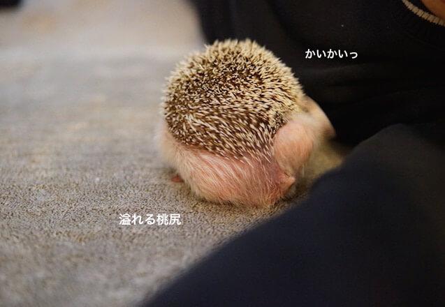 f:id:chikojirou:20170327211619j:plain