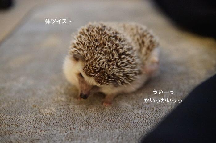 f:id:chikojirou:20170327211649j:plain
