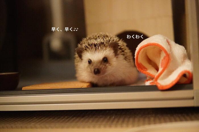 f:id:chikojirou:20170327211846j:plain